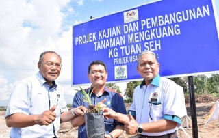 Conduct R&D on mengkuang planting